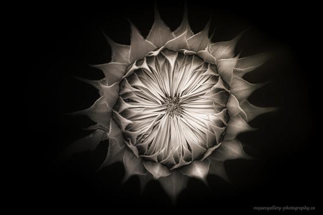 Hidden Blossom
