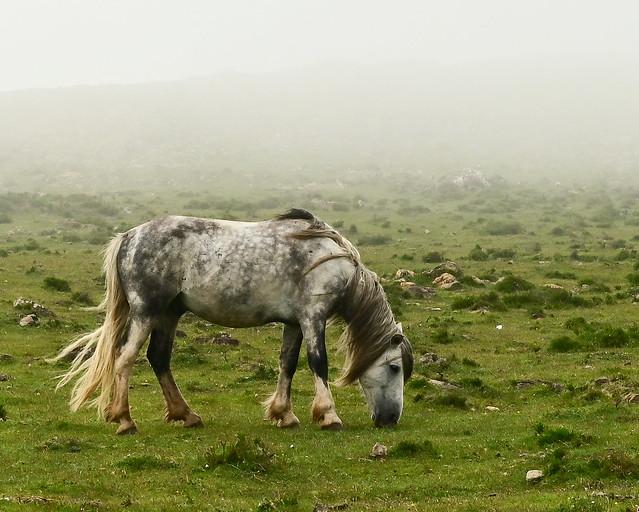 Caballos salvajes en Galicia
