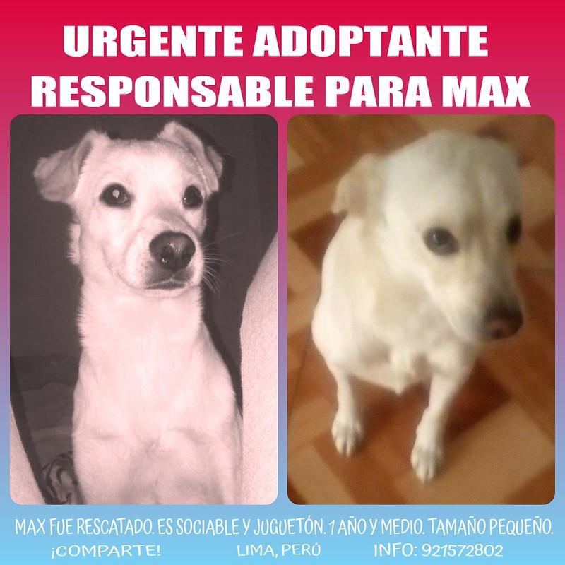 Urgente: adoptante para Max en Lima