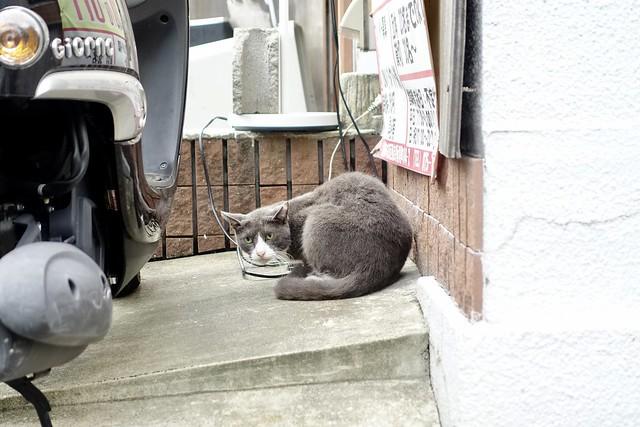 Today's Cat@2021−08−16