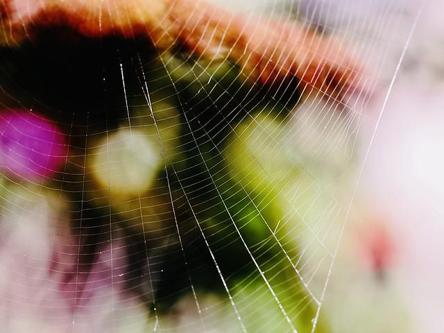 abstract cobweb