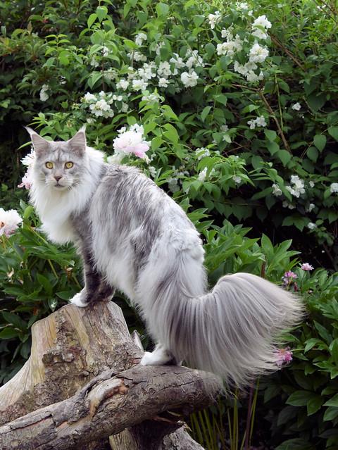 Osheen qui profite du jardin.