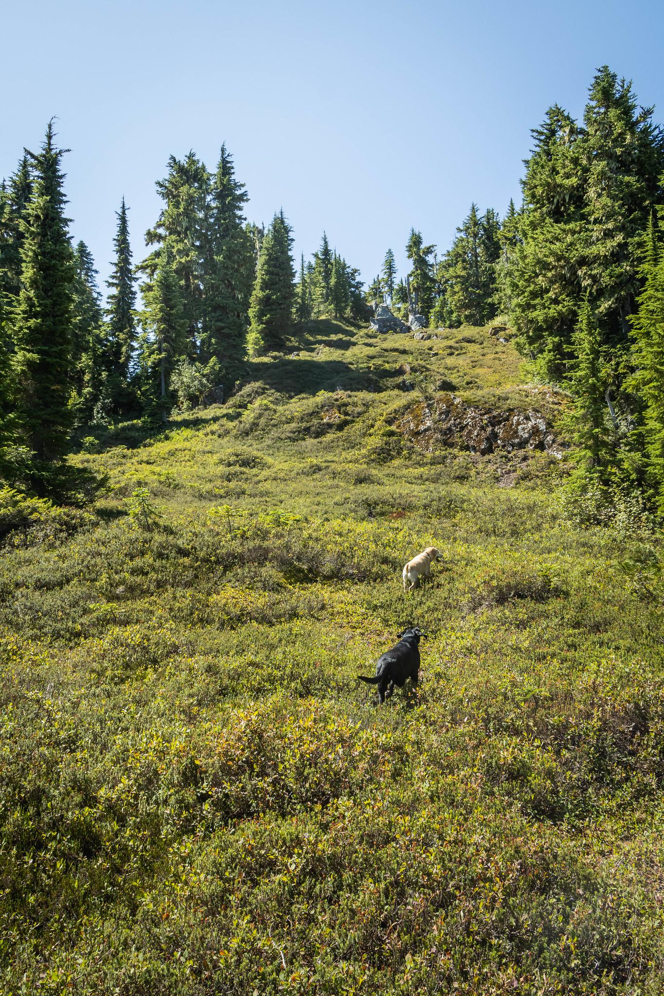 4400' meadow below Point 5125