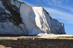 Falaise immaculée, Douvres, Kent, Angleterre, Royaume-Uni.