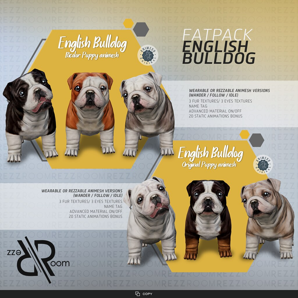 English Bulldog Puppy Animesh ( Companion )