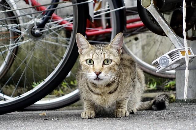 Today's Cat@2021−08−17