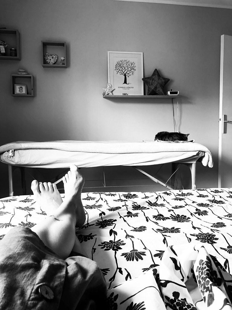 Le chat qui aimait les massages.. 🐈