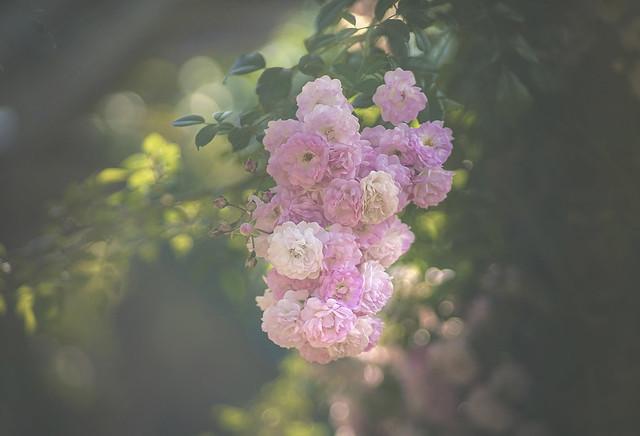 pretty garland