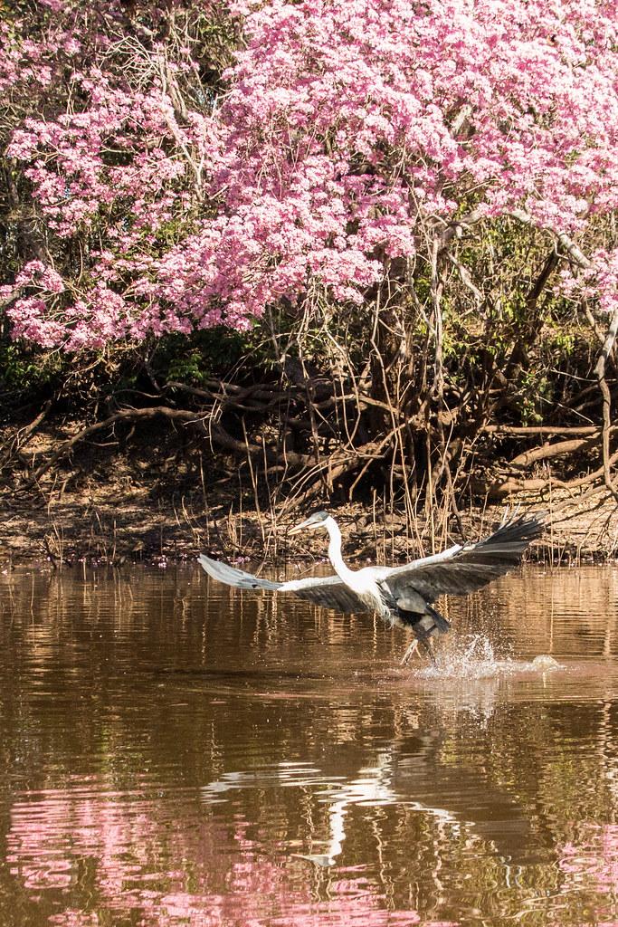 Pantanal-1623