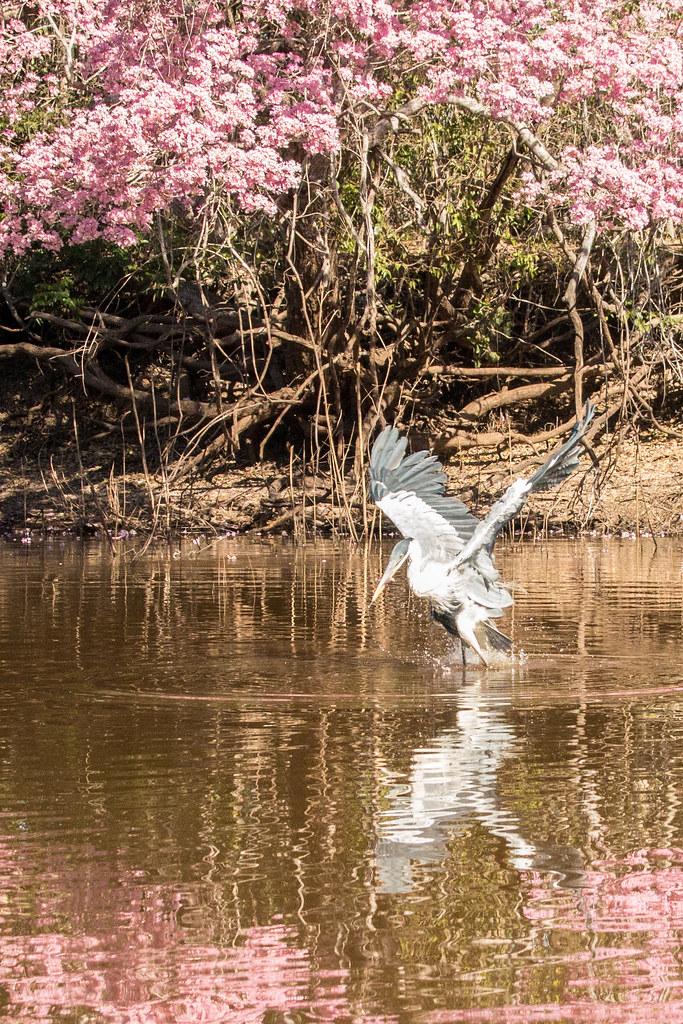 Pantanal-1622