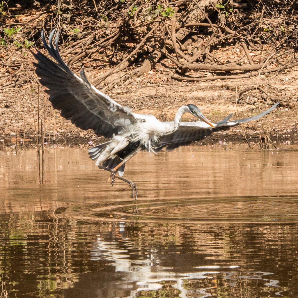 Pantanal-1644