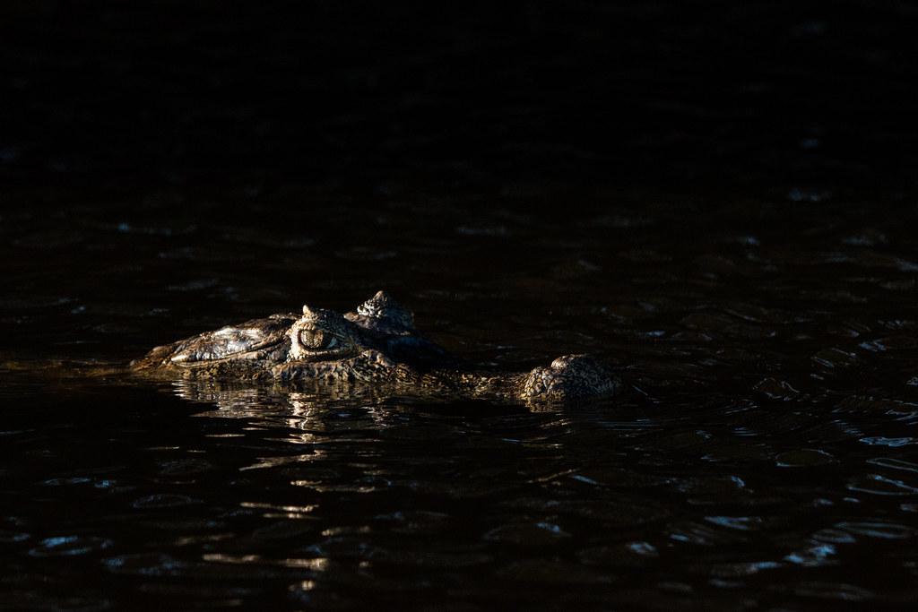 Pantanal-3219