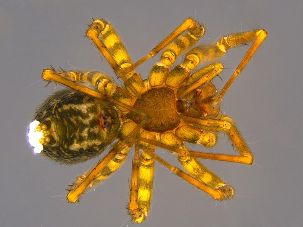 3b - Araneae sp.