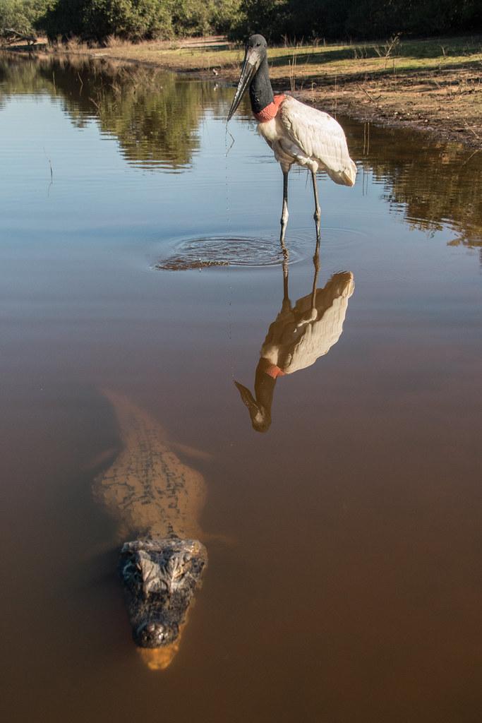 Pantanal-1522