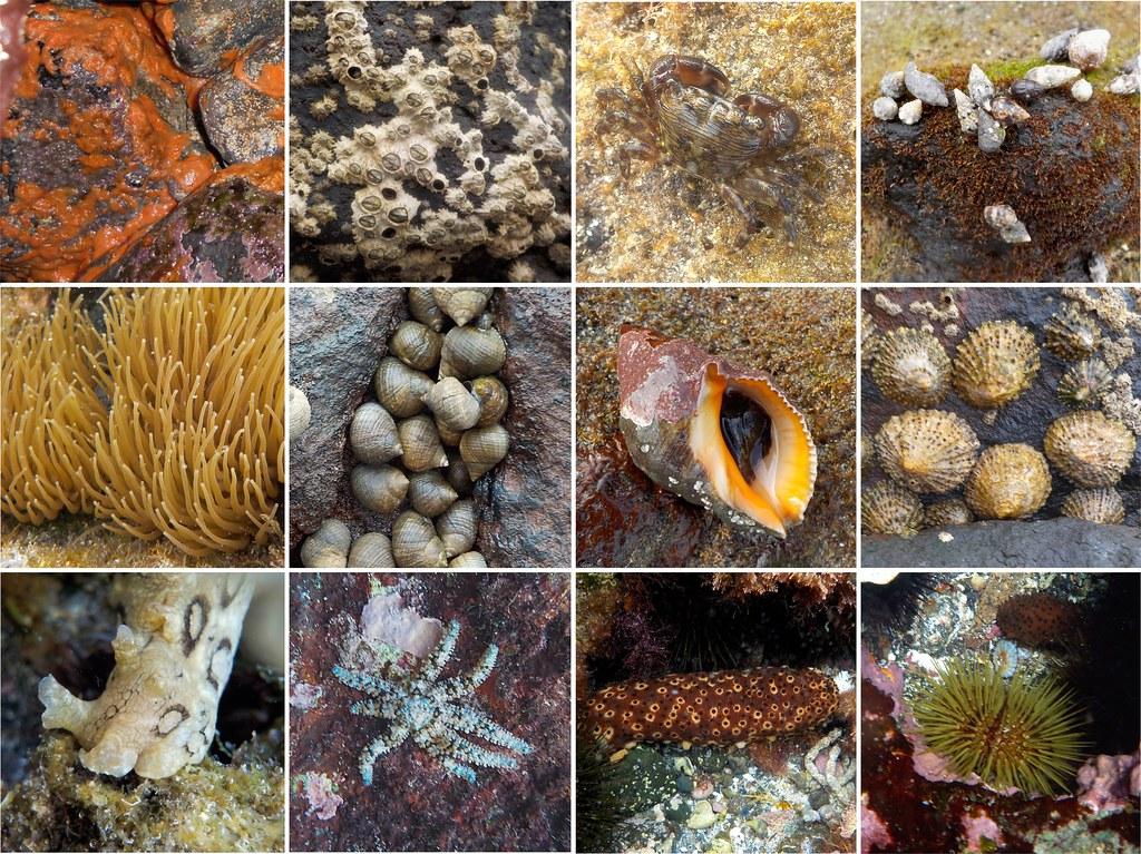 Invertebrados en la playa de San Telmo