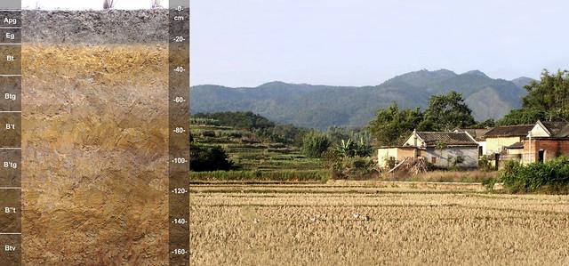 Paleaquult and landscape CN