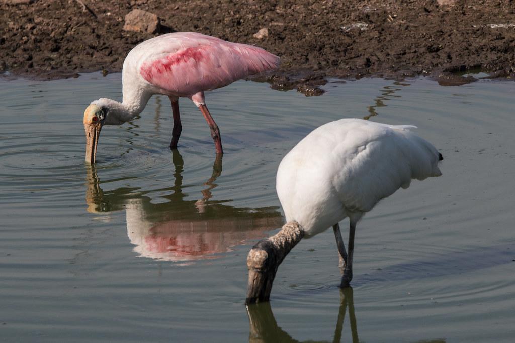 Pantanal-4770