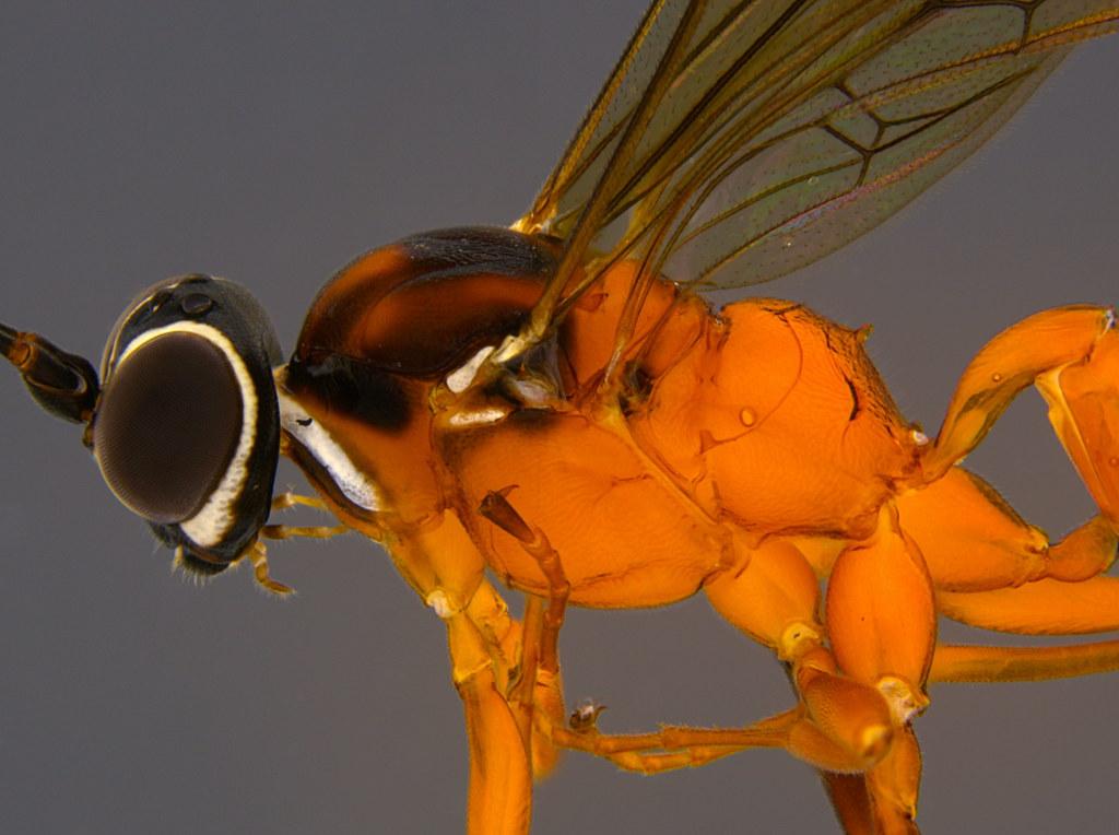 28b - Ichneumonidae sp.