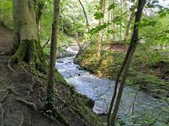Skipton Castle Woods beck