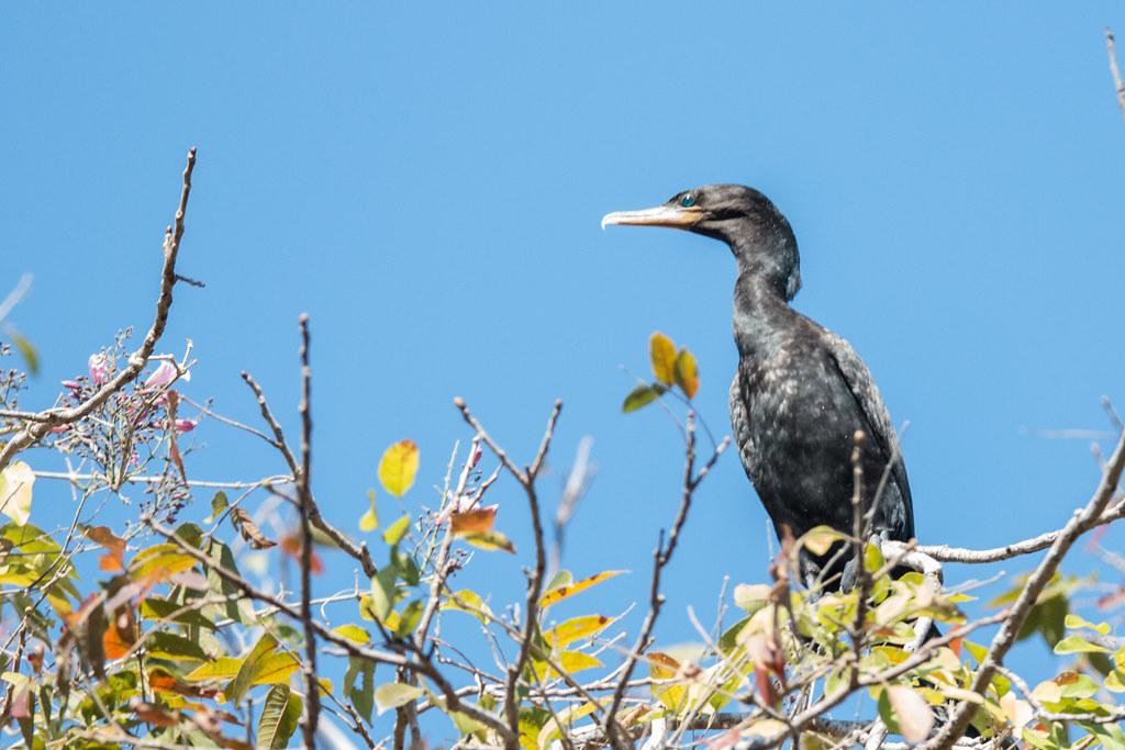 Pantanal-2163