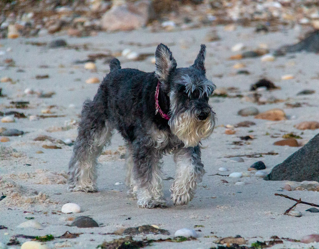 Pasha at Bailie Beach