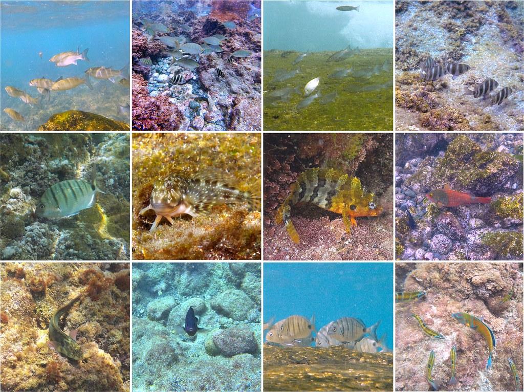 Peces observables en la playa de San Telmo