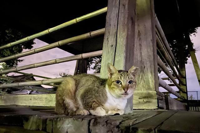 Today's Cat@2021−08−18
