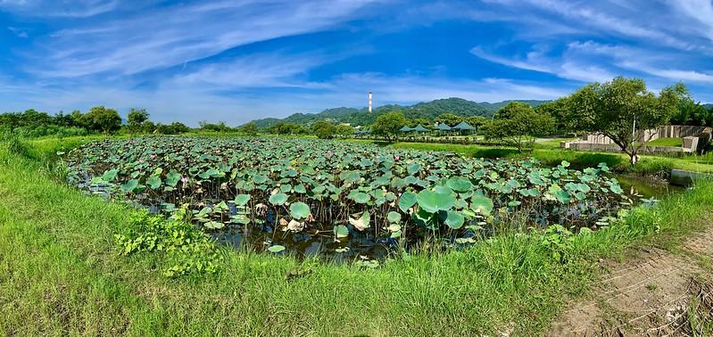 柑園河濱公園荷花池