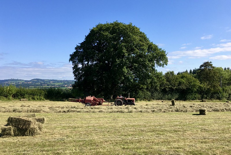 A photo of a field with a tractor and hay baler passing in front of a large oak tree