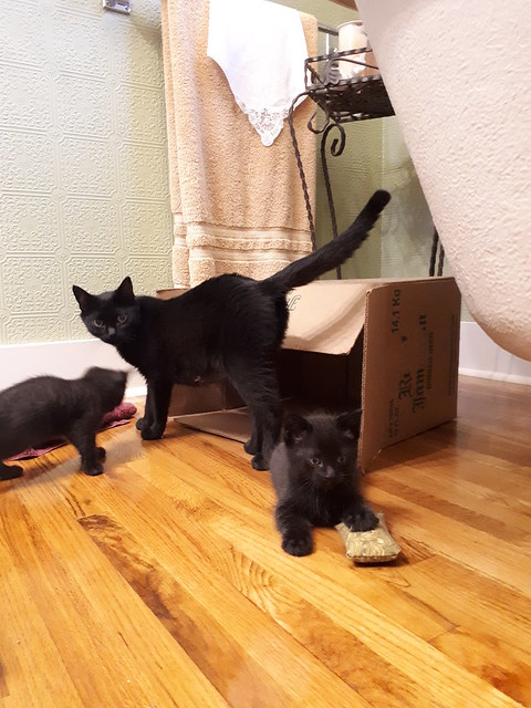 Visiting Adorable Foster Kitties!