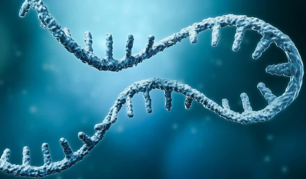 introduire-un-ARNm-dans-une-protéine-traiterait-des-maladies