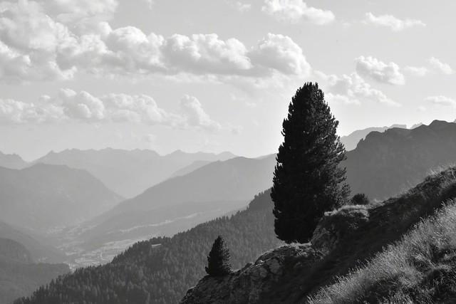 trees_sun_path_1