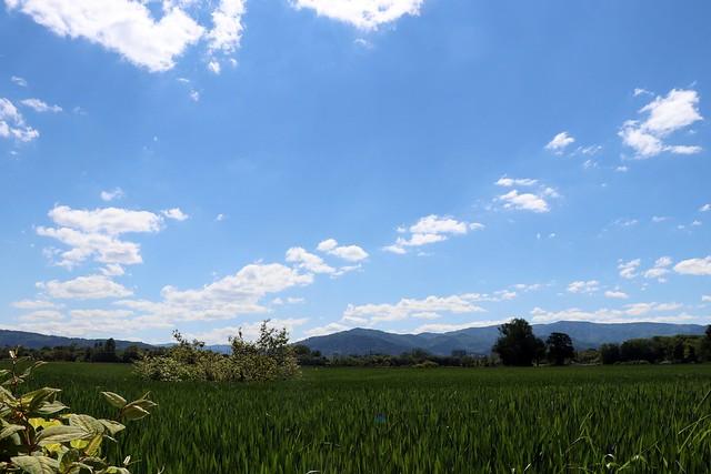 Dietenbach landscape (May) - III