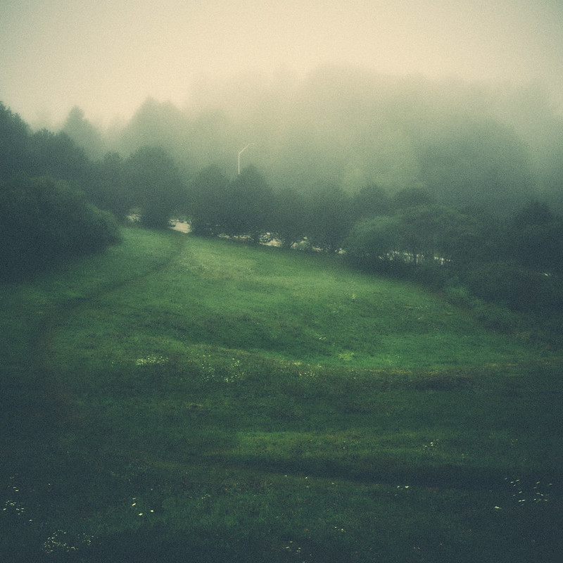 231/365 : One foggy morning