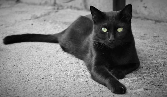 Beautiful black cat ☘