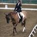 4-H Horse Dressage at 21 Super Fair - 09