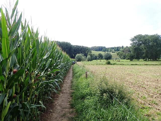 2021-08-12        Dag 2  Rugzak - 10 - daagse  Heuvelland   (104)