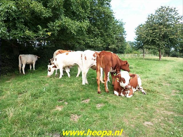 2021-08-15     dag 5  Rugzak - 10 - Daagse  Heuvelland (33)