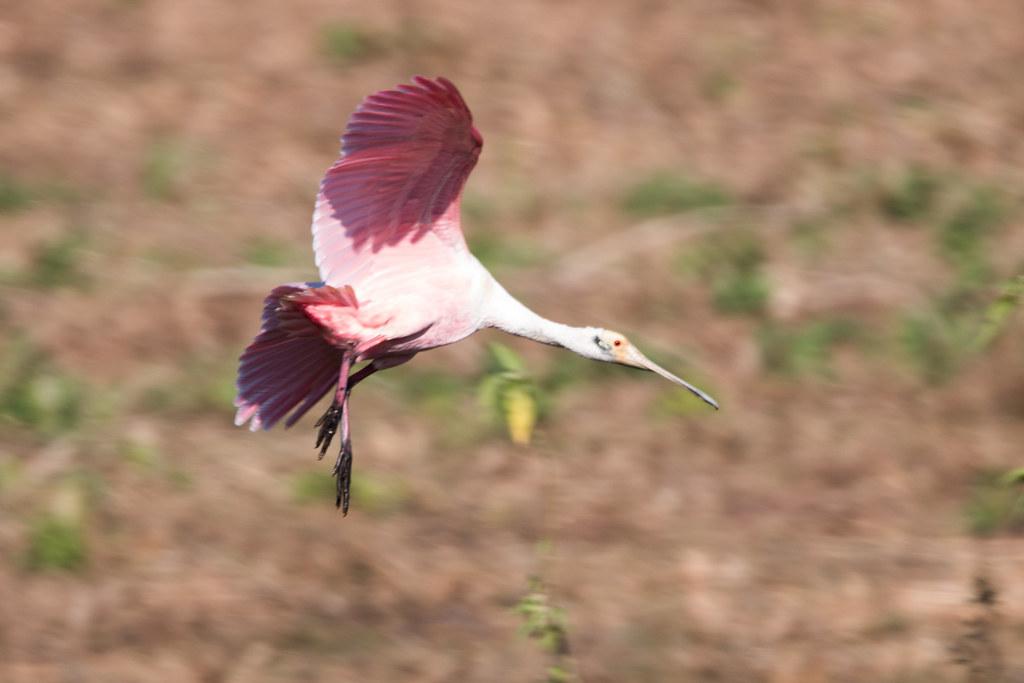 Pantanal-0237
