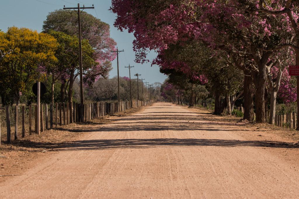 Pantanal-5