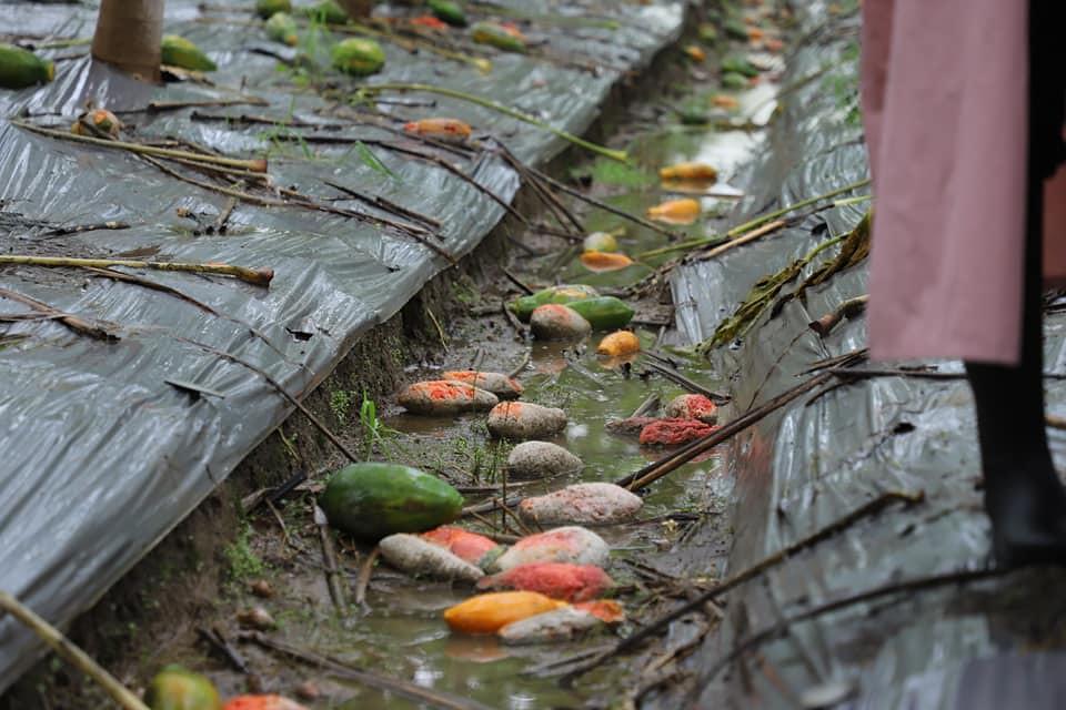 202108農業碳排與淨零策略。近期的強降雨造成嚴重農損。照片來源:陳吉仲臉書