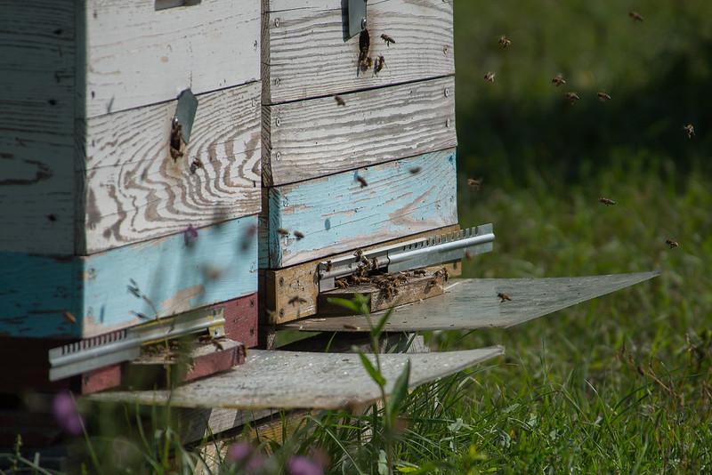 Экологически чистый тарханский мед собирается из лугового разнотравья (клевер, донник, иван-чай, шалфей, пустырник, мята водная, подсолнух), липы, фруктовых деревьев.