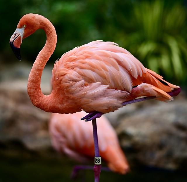 Flamingo #28 Profile