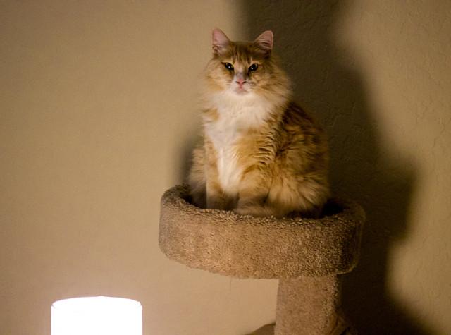 Cat Front-Lit Lamp Noir Cat: