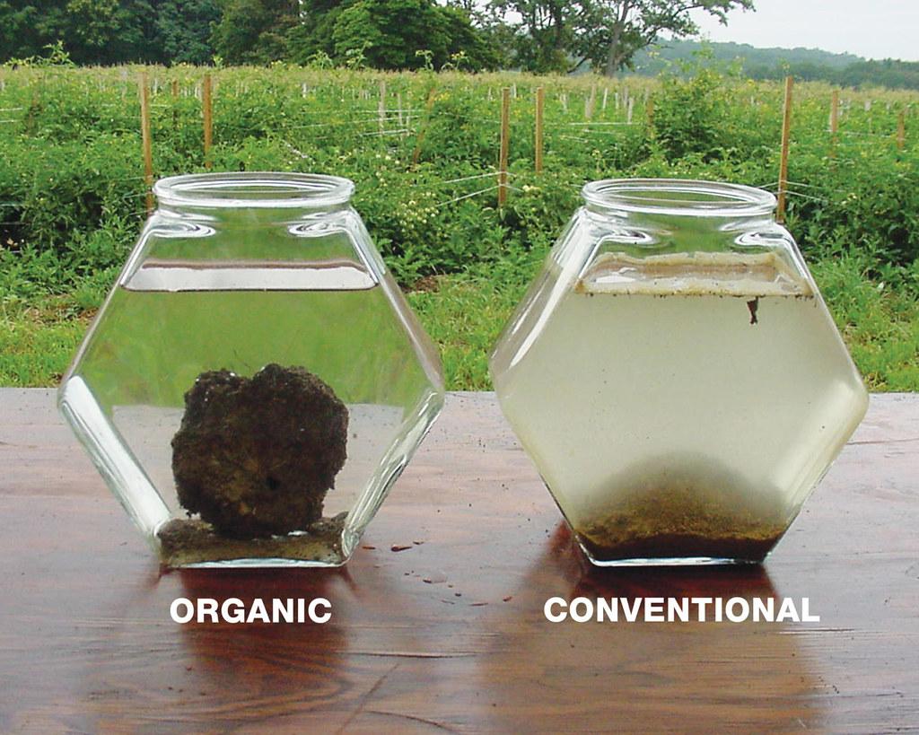 施用農藥化肥,土壤生物相受到影響,有機質含量低,理化性質差(圖左);有機土壤恰好相反,凝聚力較大(圖右)。文字說明郭華仁,照片來源Rhodale Institute