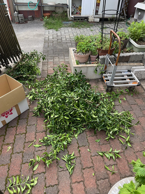 Cutting down the branches of garden tree