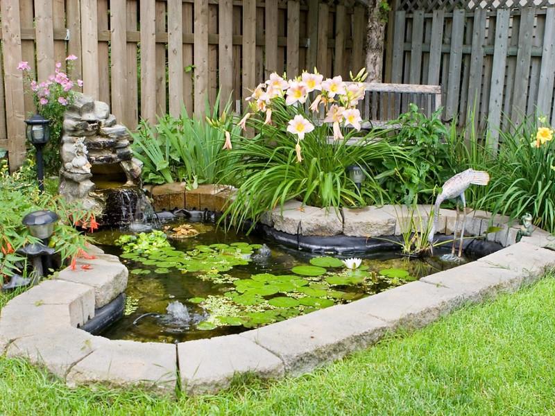 back-yard-fish-pond