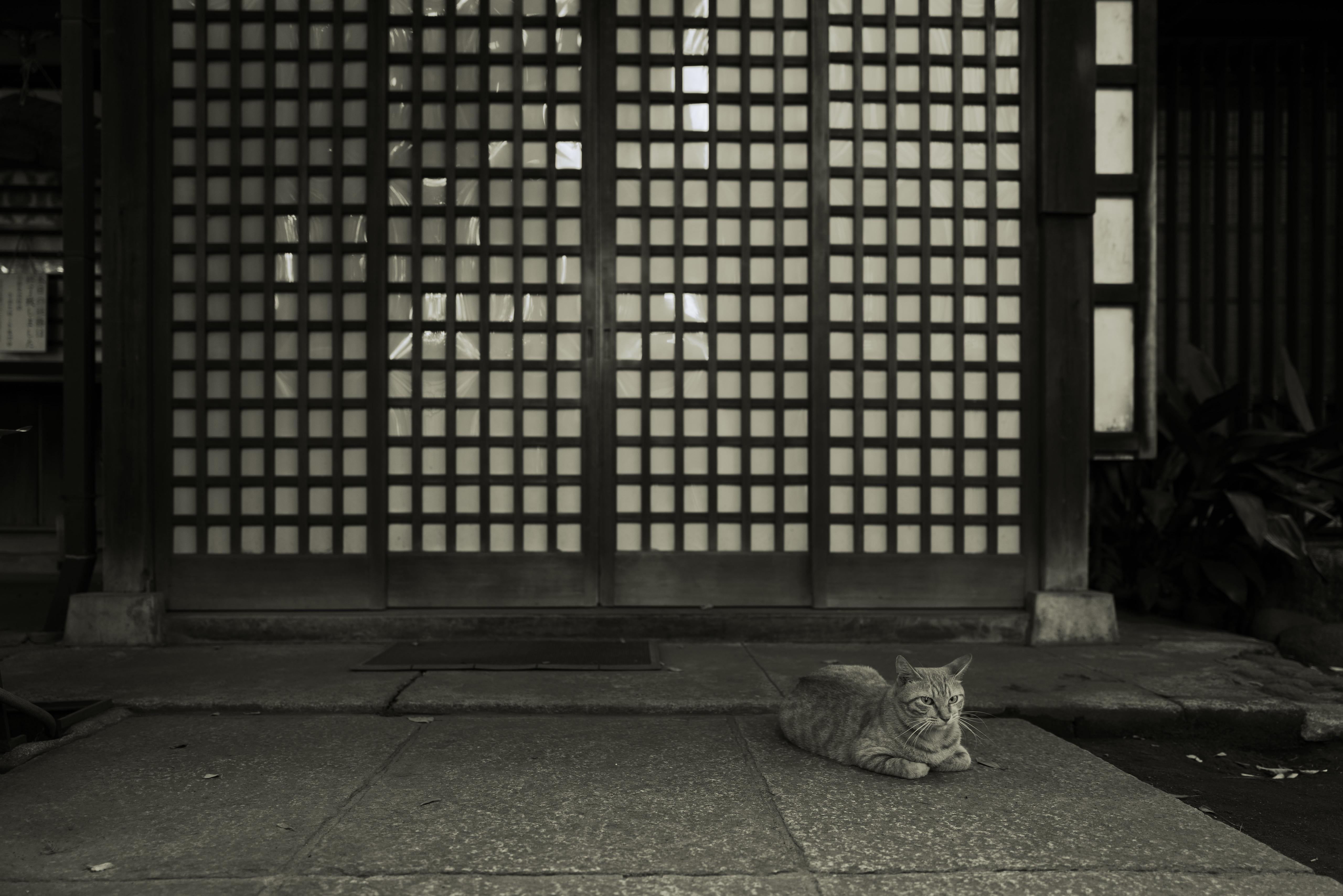 Leica Q2 Monochrome