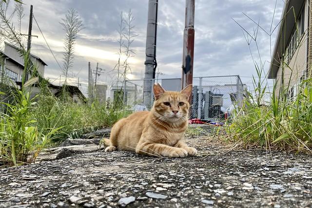 Today's Cat@2021−08−21