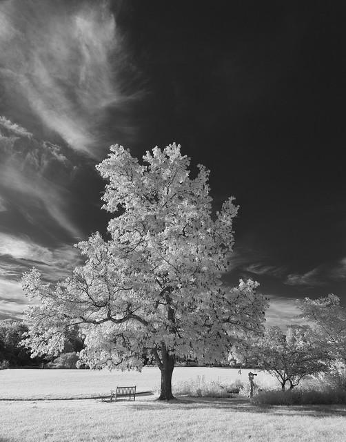 Photographer, Bench, Tree